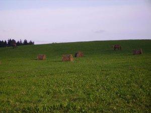 Сдается загородная  усадьба на  сутки  для 6-8 чел.