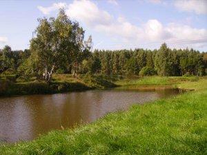 Аренда коттеджа на сутки рядом  с озером и  лесом для 10 человек.